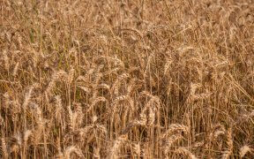 Bon à savoir sur la vente de céréales